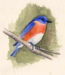 Bluebird of Happiness image 4