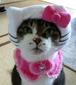 Cat Scratch Fever image
