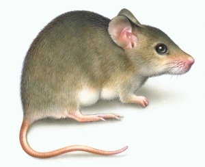 a-mouse-in-the-house-image-3