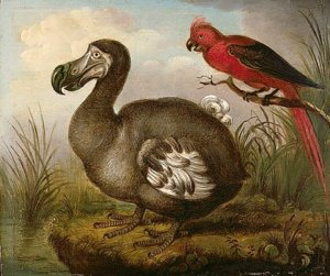 birth-of-the-dodo