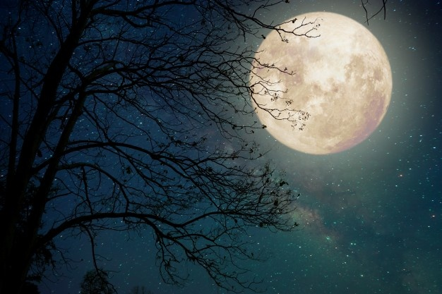 It's Not the Pale Moon That Excites Me image 2